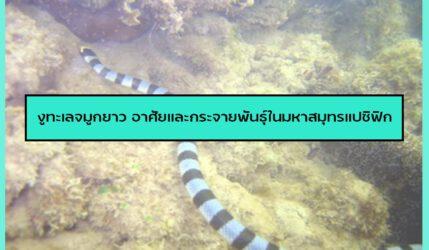งูทะเล จมูกยาวอาศัยและกระจายพันธุ์ในมหาสมุทรแปซิฟิก
