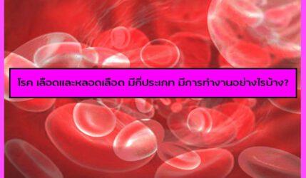 โรค เลือดและหลอดเลือด มีกี่ประเภท มีการทำงานอย่างไรบ้าง?