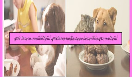 สุนัข กินอาหารคนได้หรือไม่ สุนัขกินของเหลือปลอดภัยและดีต่อสุขภาพหรือไม่